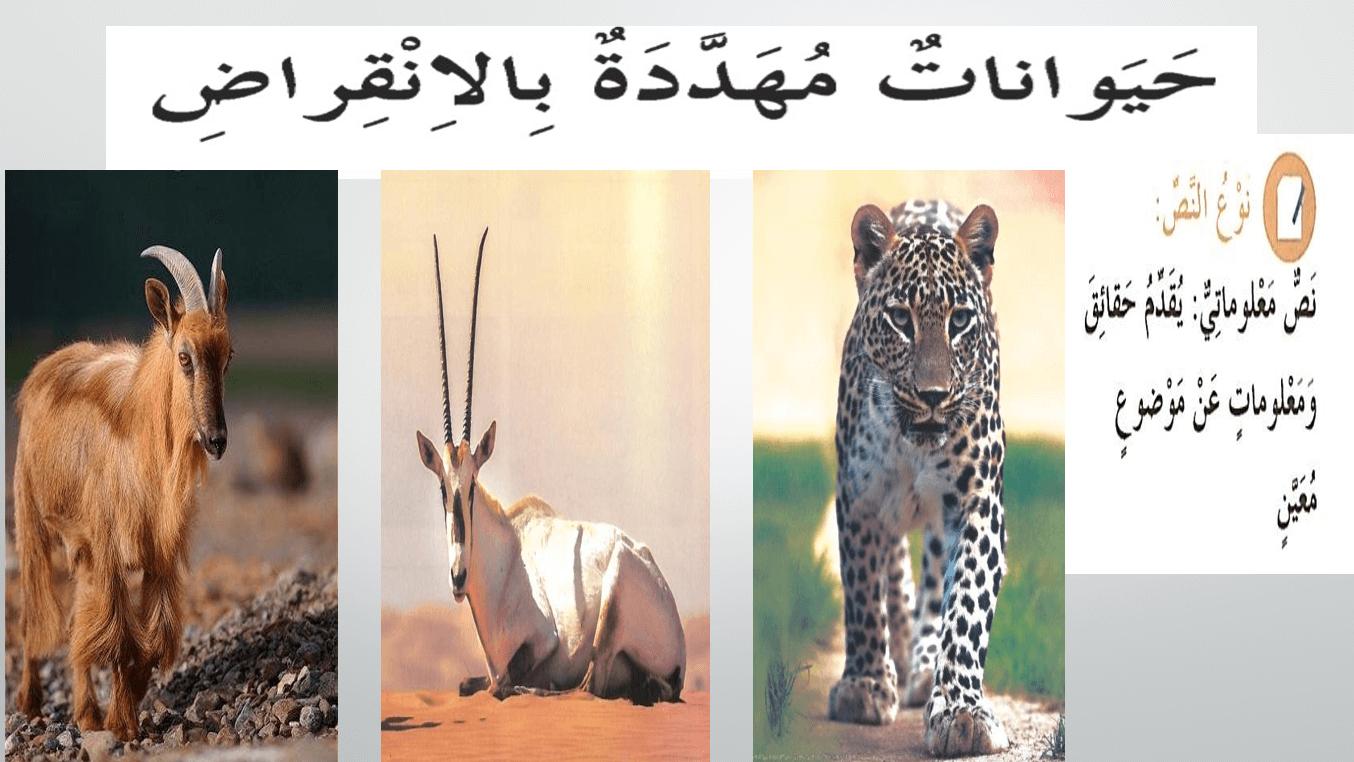 بوربوينت درس حيوانات مهددة بالانقراض مع الاجابات للصف الرابع مادة اللغة العربية