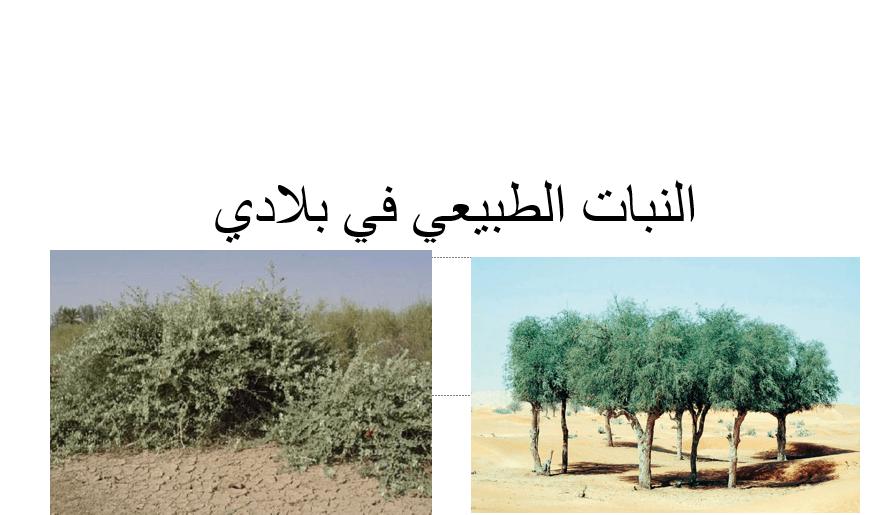 الدراسات الإجتماعية والتربية الوطنية بوربوينت درس النبات الطبيعي في بلادي للصف الخامس ملفاتي