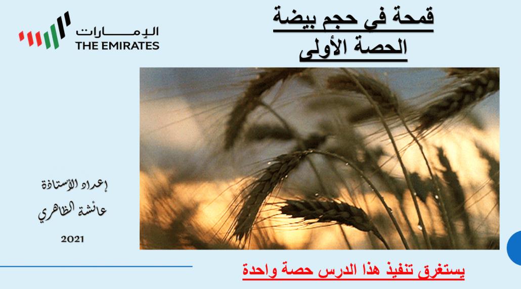 بوربوينت قمحة في حجم بيضة للصف السابع مادة اللغة العربية