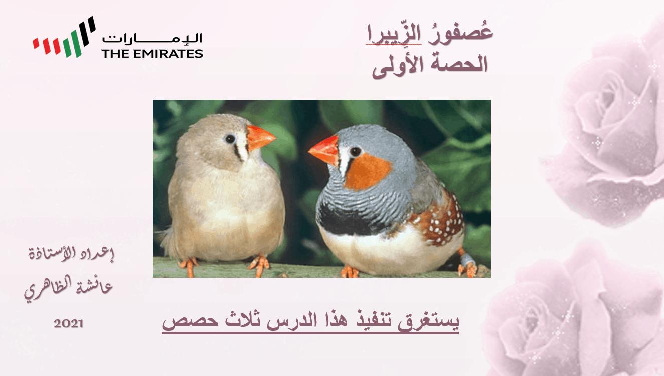 حل درس عصفور الزيبرا الصف السابع مادة اللغة العربية - بوربوينت