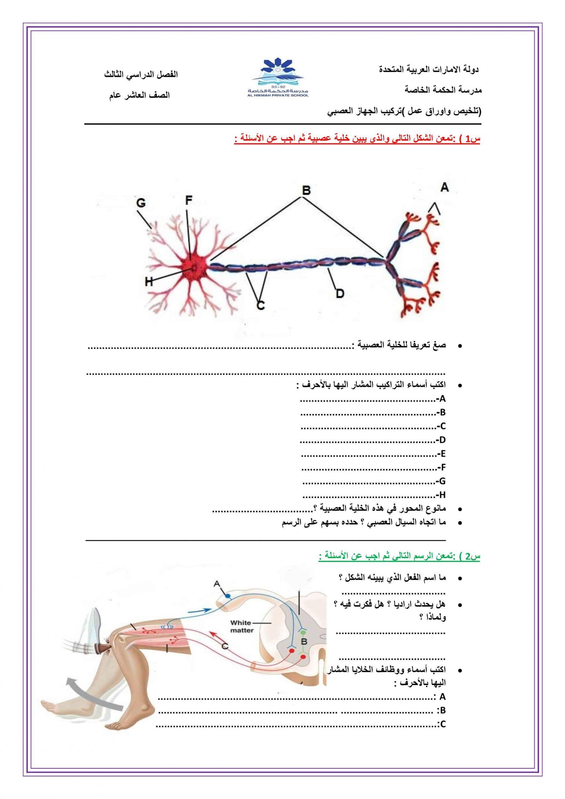 ملخص وأوراق عمل تركيب الجهاز العصبي الصف العاشر مادة الأحياء